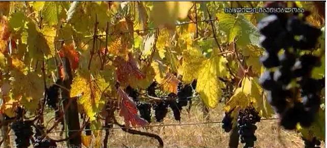Грузинские БИО вина